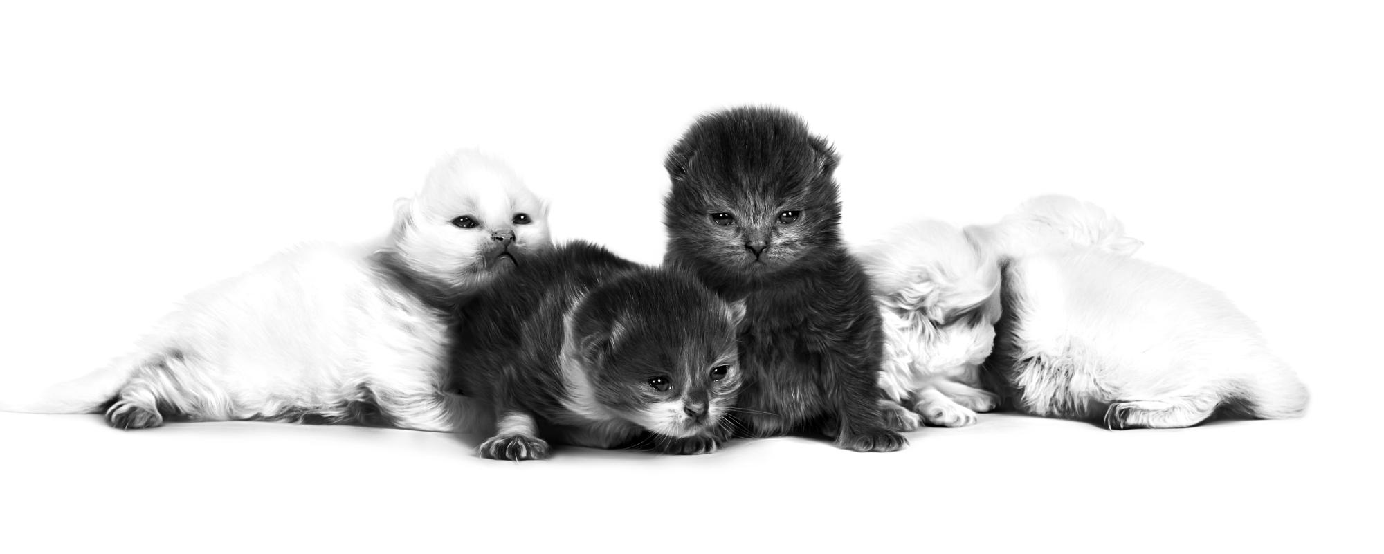Neonatale kittens
